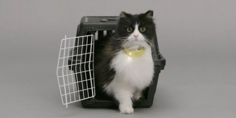 catterbox01